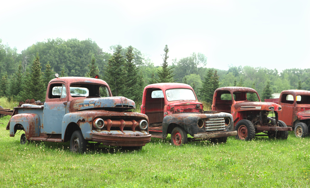 Old rusted out classic Chevy trucks