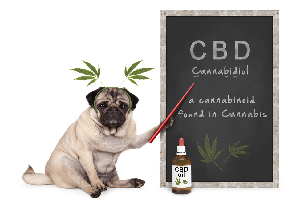 Dog With CBD Oil and Chalkboard