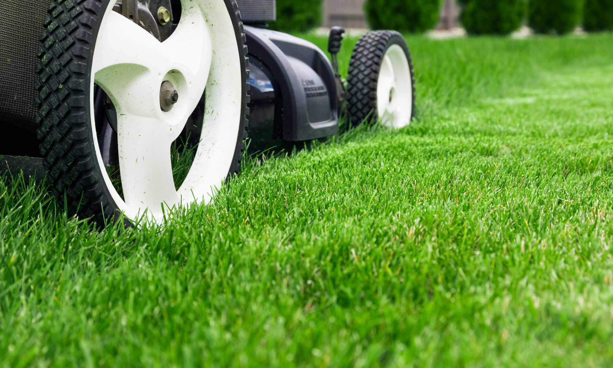 Lawn Fertilizer in Idaho Falls