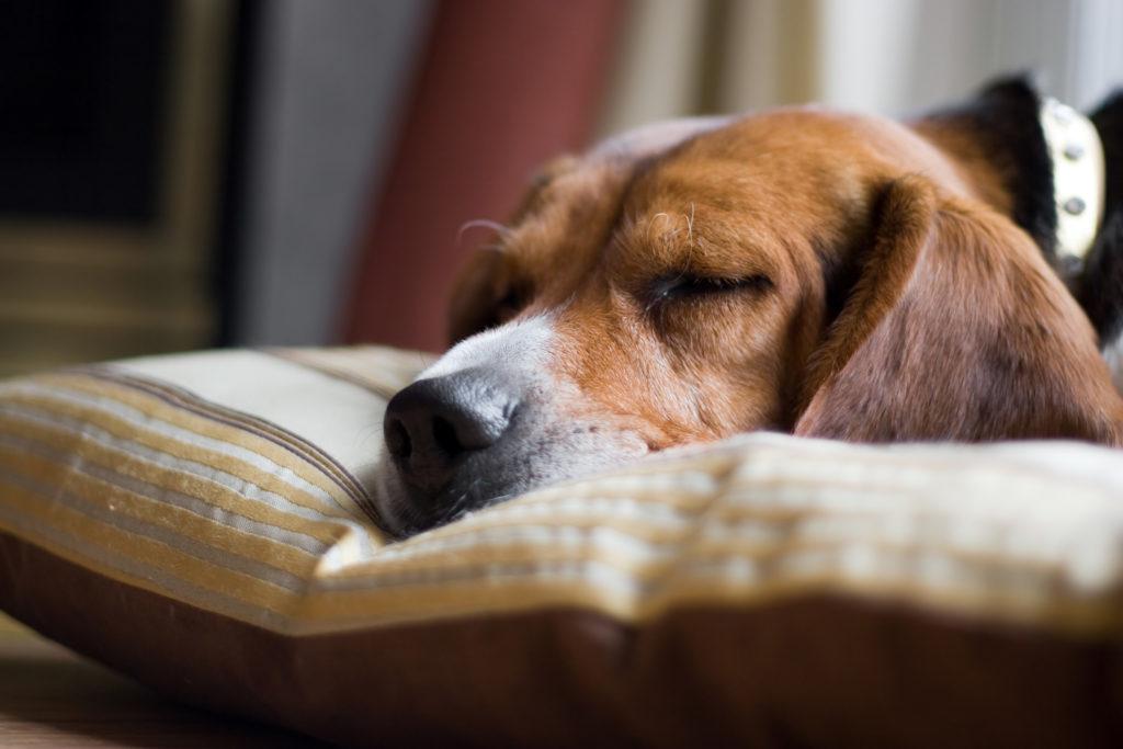 Dog Anxiety Symptoms