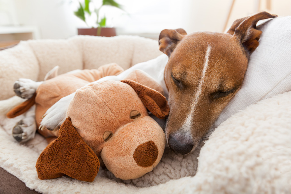 Dog With Stuffed Animal - Dogs With Cancer