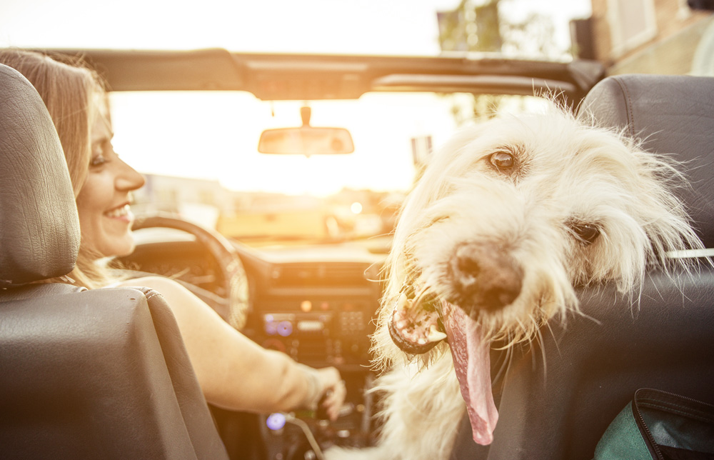 Dog loving riding in car