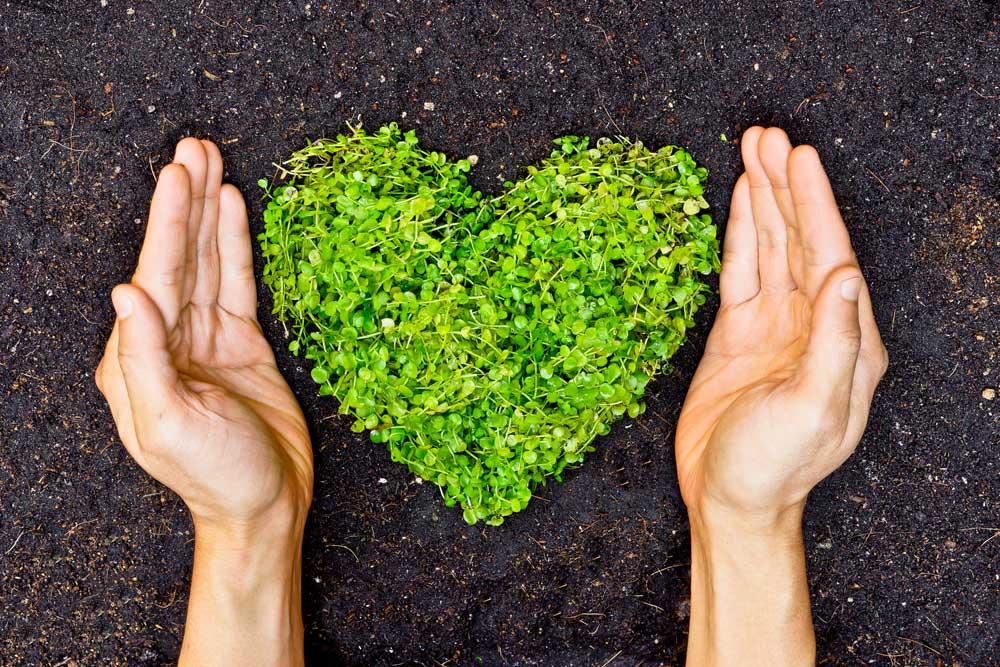 Eco Conscious - Health & Wellness Trends