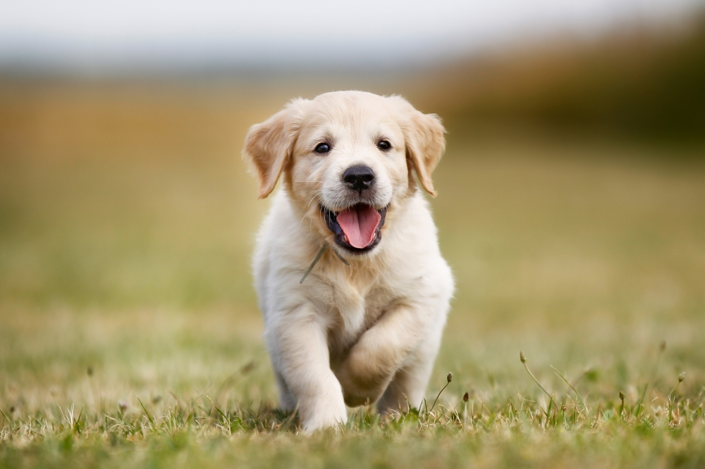 Happy Puppy in Grass - 5 Things to Think About When Welcoming a Puppy Home