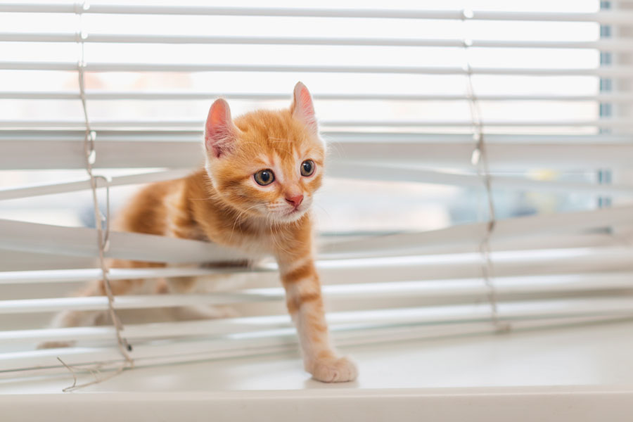 How To Animal-Proof Your Window Treatments