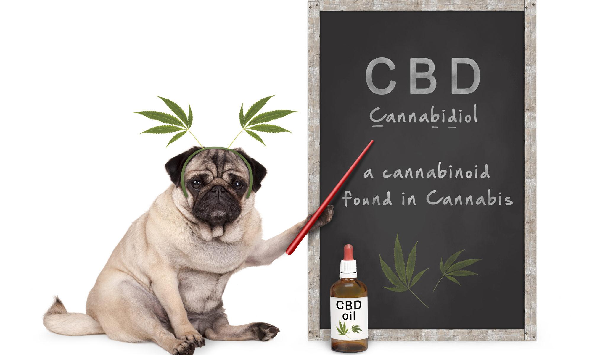 CBD Dog whiteboard